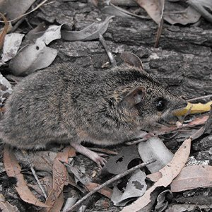 Changes to Threatened Species List under EPBC Act